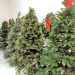 Used Christmas trees in the St. Vincent de Paul Christmas section, Fond du Lac.